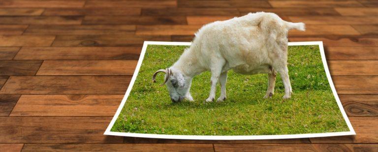 Как обрезать изображения с помощью фигур в Photoshop