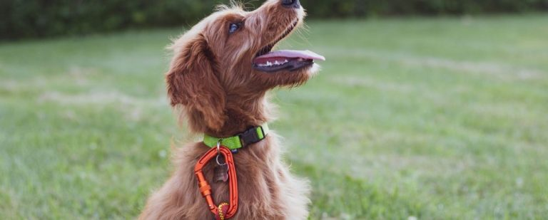 5 лучших приложений для дрессировки собак для Android и iPhone